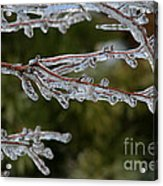 Icy Branch-7482 Acrylic Print