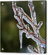 Icy Branch-7498 Acrylic Print