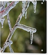 Icy Branch-7506 Acrylic Print