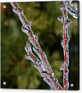 Icy Branch-7520 Acrylic Print