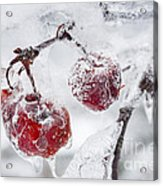 Icy Branch With Crab Apples Acrylic Print