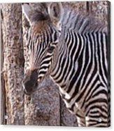 Idaho Falls - Tautphaus Park Zoo Acrylic Print