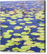 Idyllic Pond Acrylic Print