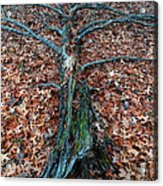 If A Tree Falls In The Woods Acrylic Print