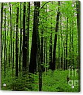 If A Tree Fell In The Forest... Acrylic Print