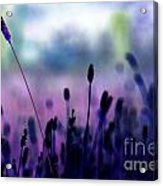 If I Had A Purple Crayon ... Acrylic Print