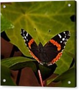 If Not A Monarch At Least A Princess Acrylic Print