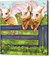 If Pigs Could Fly Acrylic Print by Jane Schnetlage