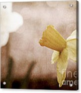 If These Flowers Could Speak  Acrylic Print
