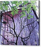 If Wood Could Talk Acrylic Print