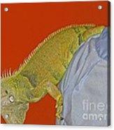 Iguana By The Tail Acrylic Print