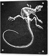Iguana Skeleton In Silver On Black  Acrylic Print