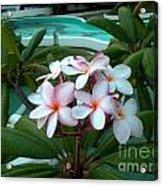 Ilan Ilan Flowers Acrylic Print