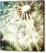Illuminated Wishes Acrylic Print