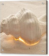 Illumination Series Sea Shells 5 Acrylic Print