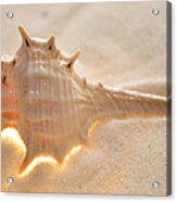 Illumination Series Sea Shells 6 Acrylic Print