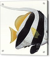 Illustration Of A Pennant Coralfish Acrylic Print by Carlyn Iverson
