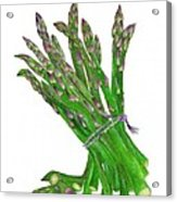 Illustration Of Asparagus Acrylic Print