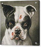 I'm A Bad Dog What Kind Of A Dog Are You Circa 1895 Acrylic Print by Aged Pixel