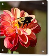 I'm On The New Pollen Diet Acrylic Print