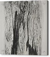 Image Of Face In Wood Bark Acrylic Print by Glenn Calloway
