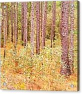 Imaginary Forest Acrylic Print