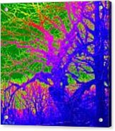 Imaginary Forest Number Two Acrylic Print