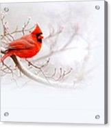 Img 2559-10 Acrylic Print