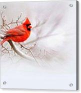 Img 2559-12 Acrylic Print