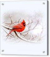 Img 2559-7 Acrylic Print
