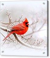 Img_2559-8 - Northern Cardinal Acrylic Print