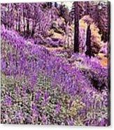Img 4892_ Purple Lupine_ Yosemite National Park  Acrylic Print