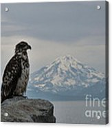 Immature Eagle And Alaskan Mountain Acrylic Print