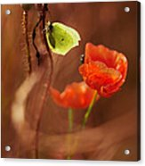 Impression With Red Poppies Acrylic Print
