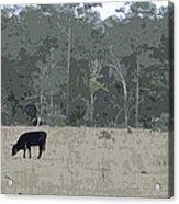 Impressionist Cows Grazing Acrylic Print