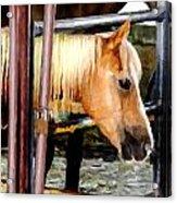 Impressionist Horse Acrylic Print