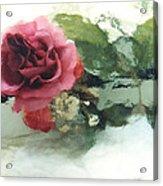Impressionistic Watercolor Roses, Romantic Watercolor Pink Rose  Acrylic Print