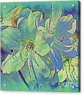 Impressionistic Blue Blossoms Acrylic Print