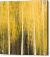 Impressions Of Golden Aspen Acrylic Print