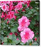 In A Blaze Of Color_2 Acrylic Print