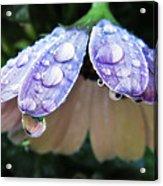 In A Drop Of Rain Acrylic Print