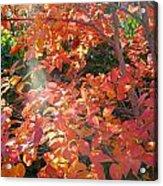 In A Golden Light 001 Acrylic Print