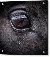 In A Horse's Eye Acrylic Print