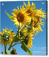 In All Their Glory Acrylic Print