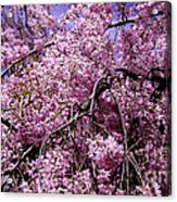 In Bunches Acrylic Print