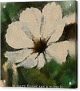 In Every Flower See A Miracle 03 Acrylic Print