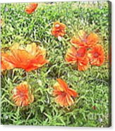 In Flanders Fields The Poppies Grow Acrylic Print