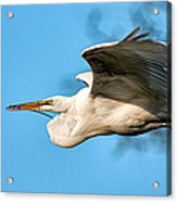 In Flight With Stick Acrylic Print