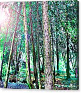 In For A Big Surprise Acrylic Print