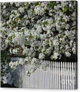 In Full Bloom Acrylic Print